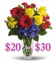 $20 - $30
