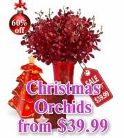 Christmas Mokara Orchids
