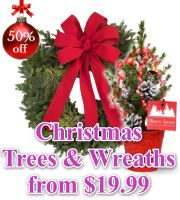 Live Mini Christmas Trees and Wreaths