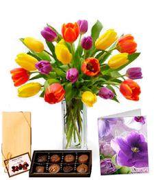 20 Tulip Combo