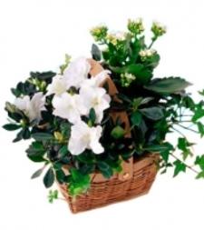 White Blooming Planter Basket