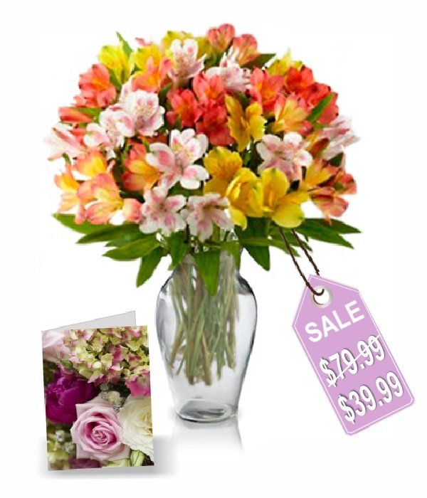 50 Blooms of Alstroemeria I