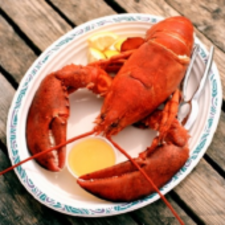 One  Lobster (1)