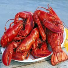 Six Lobsters (6)