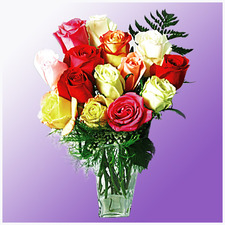 12 Mixed Colour Long Stemmed Roses