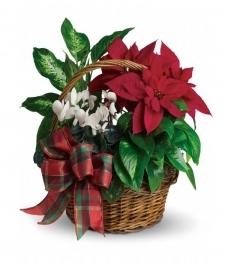 Panier de poinsettias de Noël