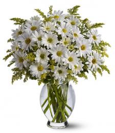 Bouquet de marguerites blanches classique