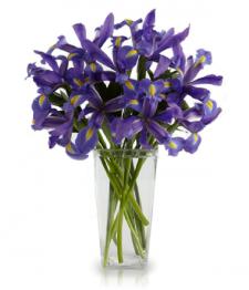 Bouquet d'Iris Bleus