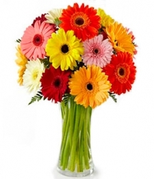 Bouquet arc-en-ciel de gerberas classique