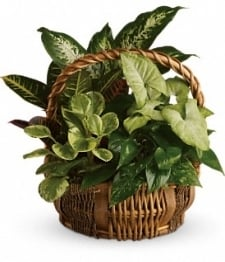 "8"" Planter Basket"