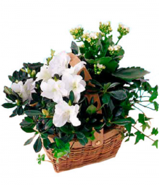 White Blooming Planter Basket