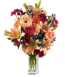 Extravaganza rose et lilas