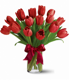15 Red Tulips