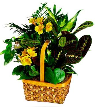 Yellow Blooming Planter Basket