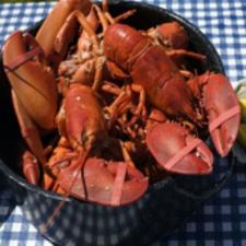 Twenty  Lobsters (20)
