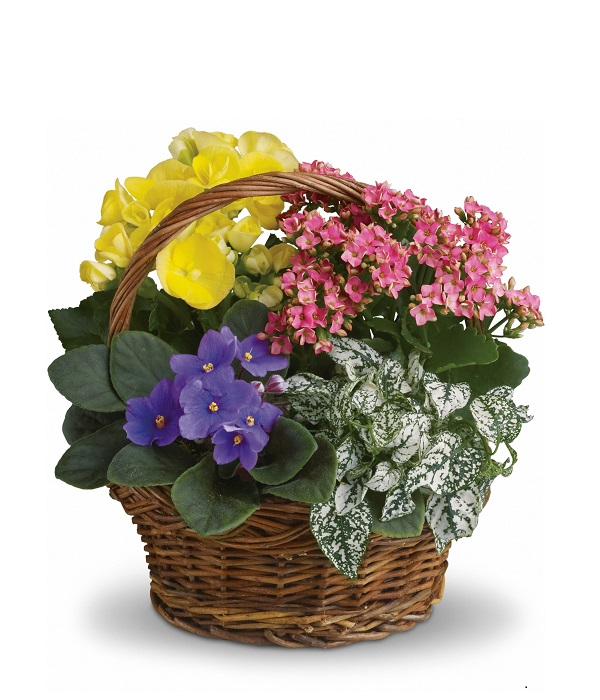 Blooming Planter Basket