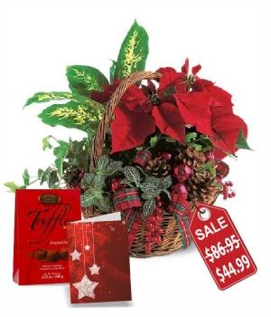 Christmas Planter Basket Special