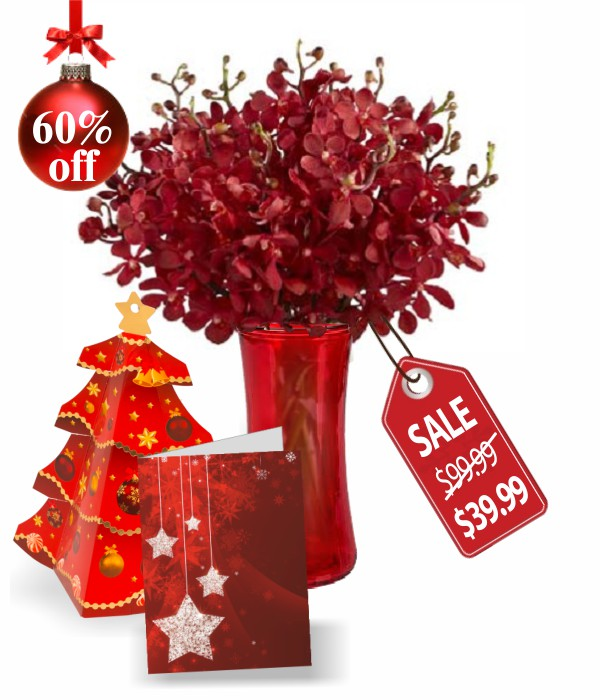 50 Bloom of Christmas Orchids