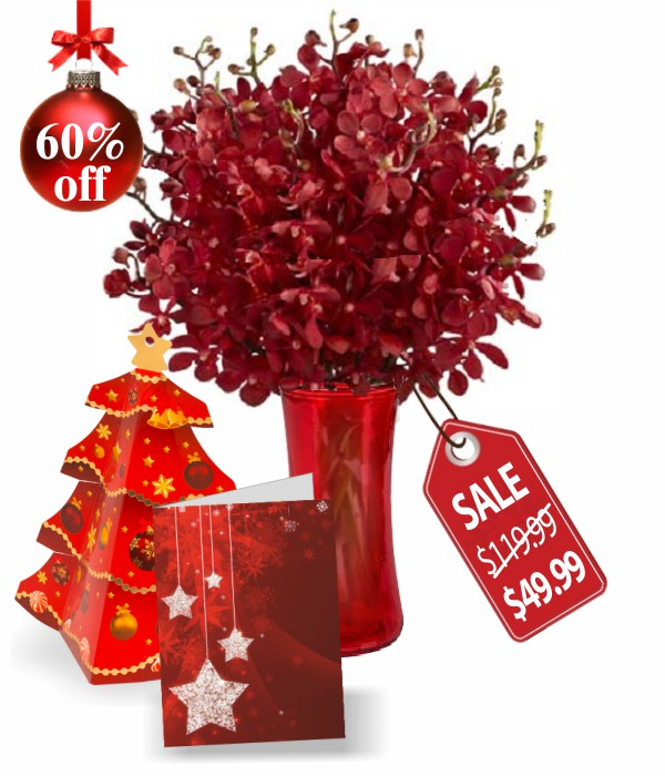 75 Blooms of Christmas Orchids
