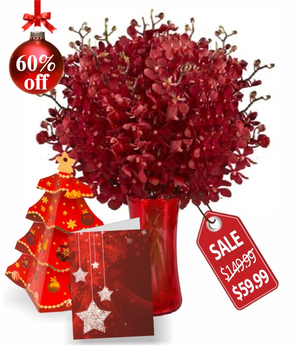 100 Blooms of Christmas Orchids