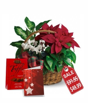 Holiday Poinsettia Basket Special