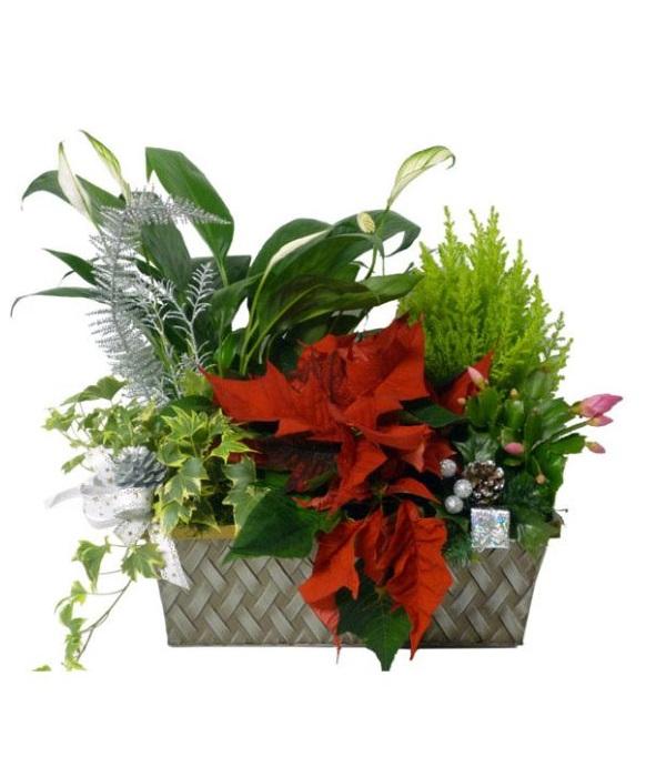 Seasons Greetings Planter Basket