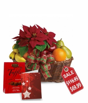 Poinsettia & Fruit Basket Special