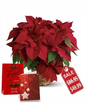 Deluxe Poinsettia Basket Special