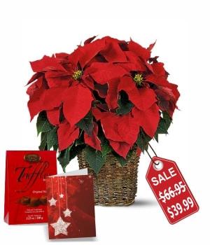 Elegant Poinsettia Basket Special