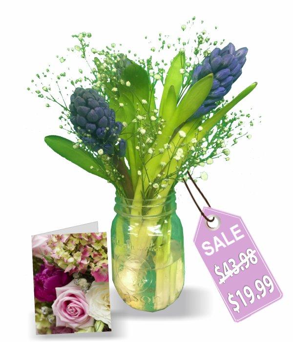 Fragrant Hyacinth in Mason Jar