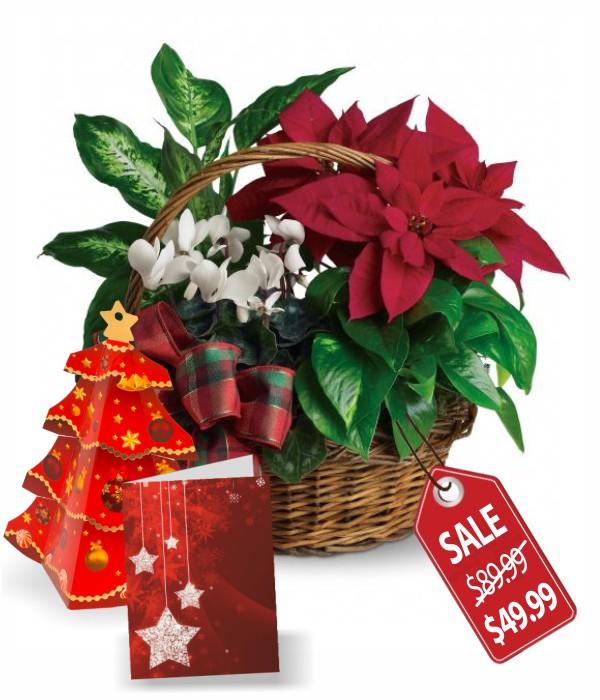Panier spécial Poinsettia des fêtes