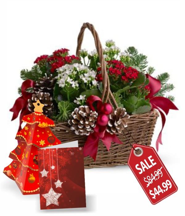 Joyeux Noel Planter Basket Special