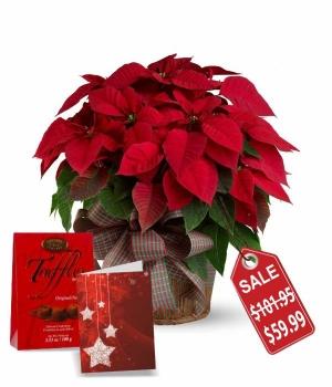 Supreme Poinsettia Basket Special