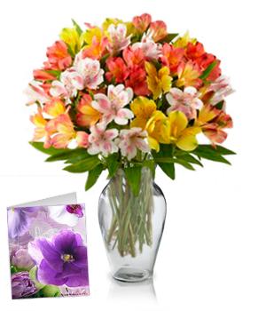 50 fleurs d'Alstroemeria