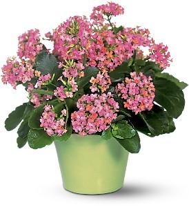 DHL Flowers III