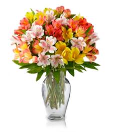 100 Blooms of Alstroemeria