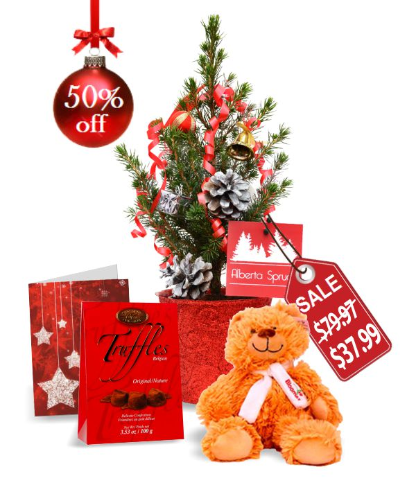 Live Mini Christmas Tree IV