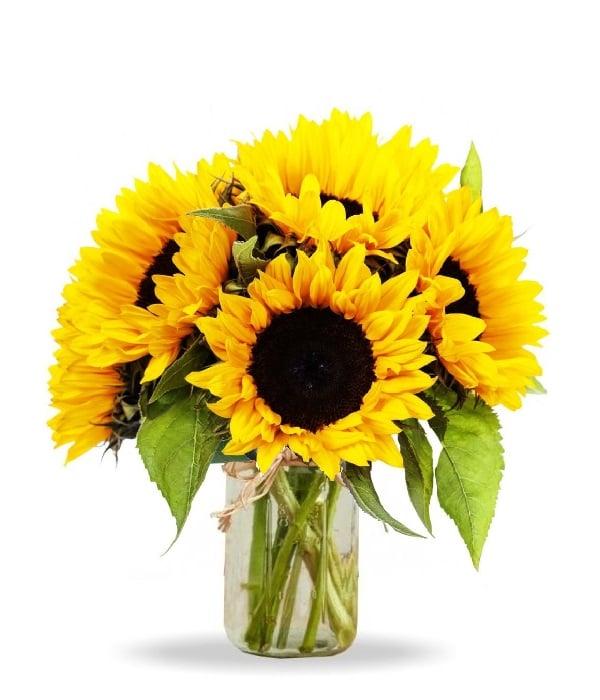 Simply Sunflowers in Mason Jar