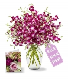 100 Blooms of Mother's Day Orchids I