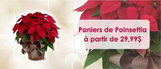 slider_Poinsettia_Baskets_fr.png