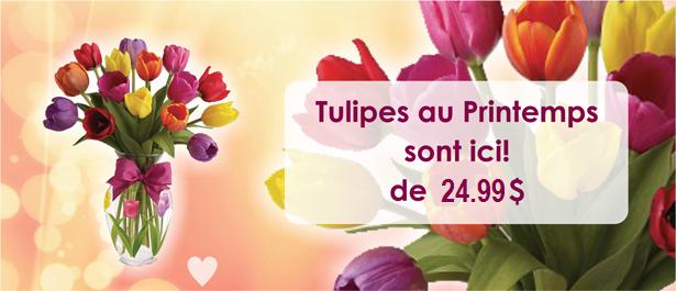 slider_Spring_Tulips_fr_24.99.png