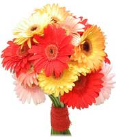 gerbera_and_daisies